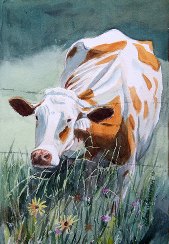 Watercolor painting of red holstein cow trying to eat the grass on the other side of the fence.