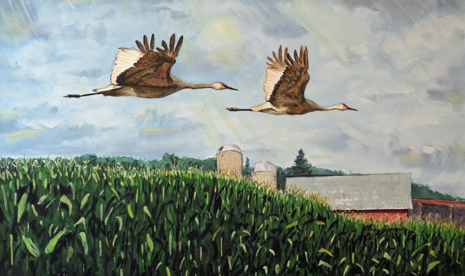 Watercolor painting of two sandhill cranes flying over cornfield