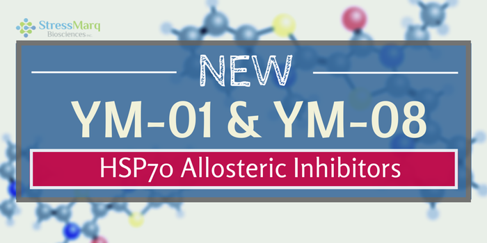 New Allosteric Inhibitors of HSP70 Have Arrived