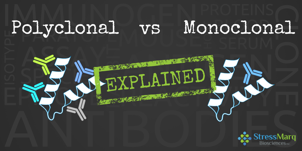 Polyclonal vs Monoclonal Antibodies