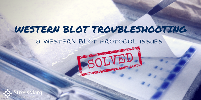 Western Blot Troubleshooting: 8 Western Blot Protocol Issues Solved