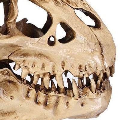 Ancient T-Rex Skull - Fossil Decoration