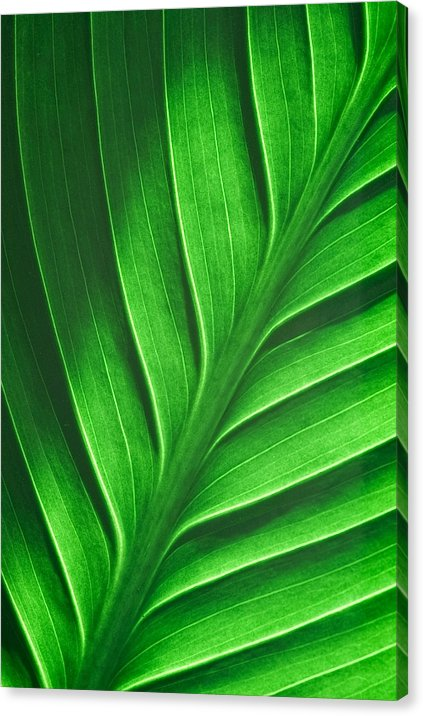 Leaf Pattern - Canvas Print