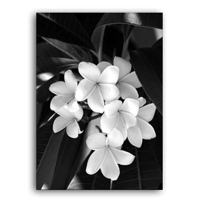 Beauty In The Darkness Black And White Flowers A Canvas Prints
