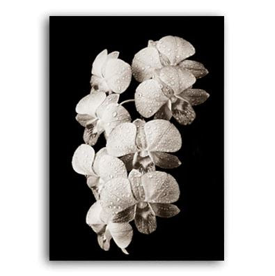 Beauty In The Darkness Black And White Flowers B Canvas Prints