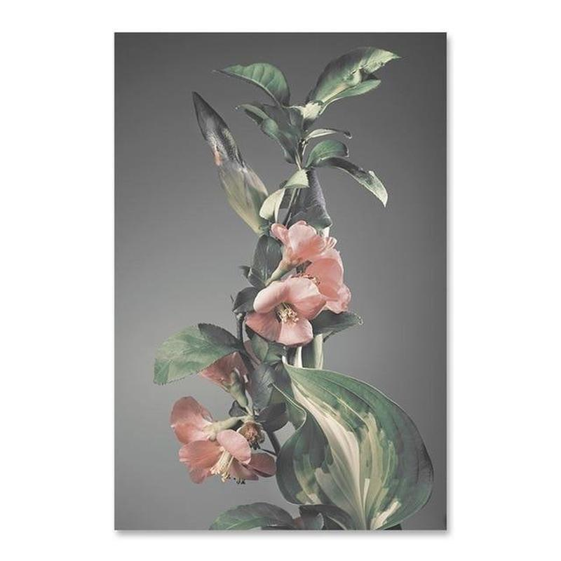 Flowers And Beauty Canvas Prints-Heart N' Soul Home-70x100 cm no frame-Pink Flowers-Heart N' Soul Home