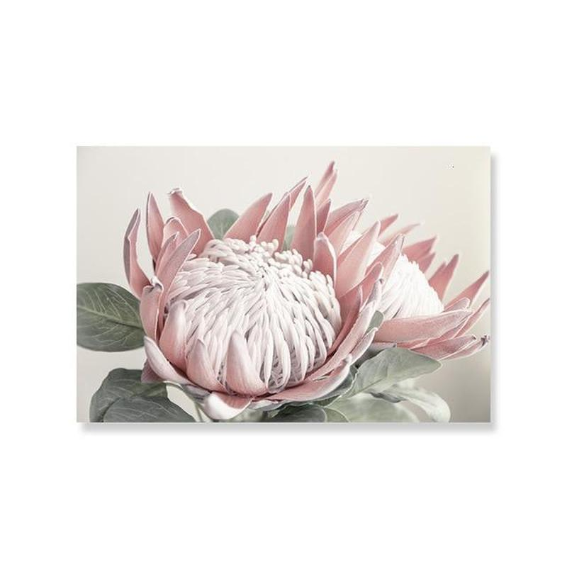 Pink King Protea Series Design C Canvas Prints-Heart N' Soul Home-30x40 cm no frame-Heart N' Soul Home