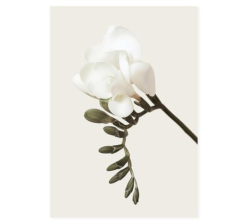 Elegant Beauty White Flowers And Quote Canvas Prints-Heart N' Soul Home