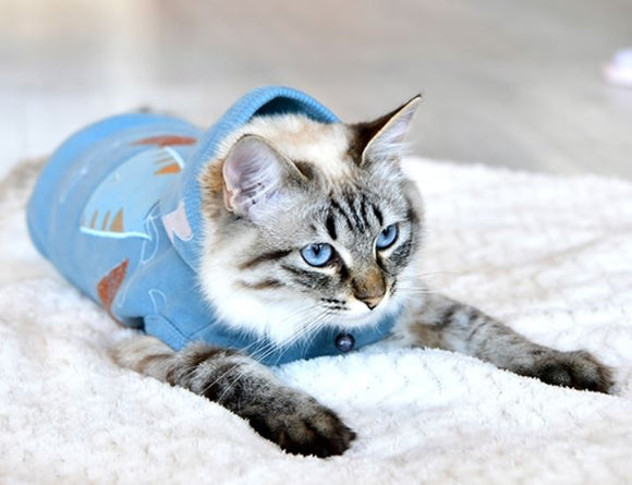 Buy Cat Clothing online
