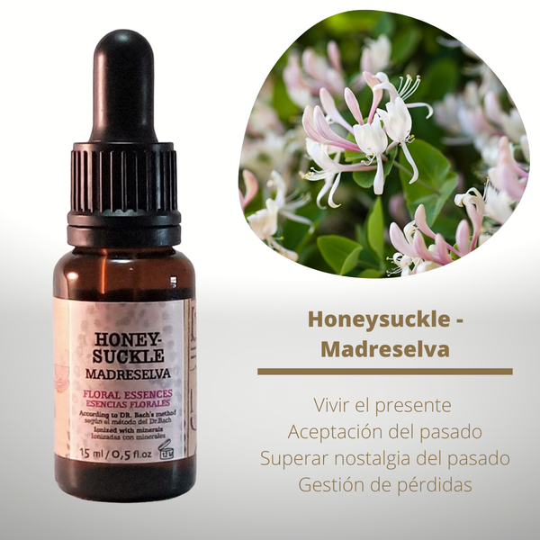 Esencia floral de Honeysuckle (Madreselva)