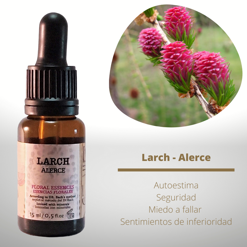 Esencia floral de Larch (Alerce)