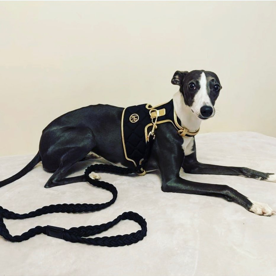 The 'Midnight' Dog Harness