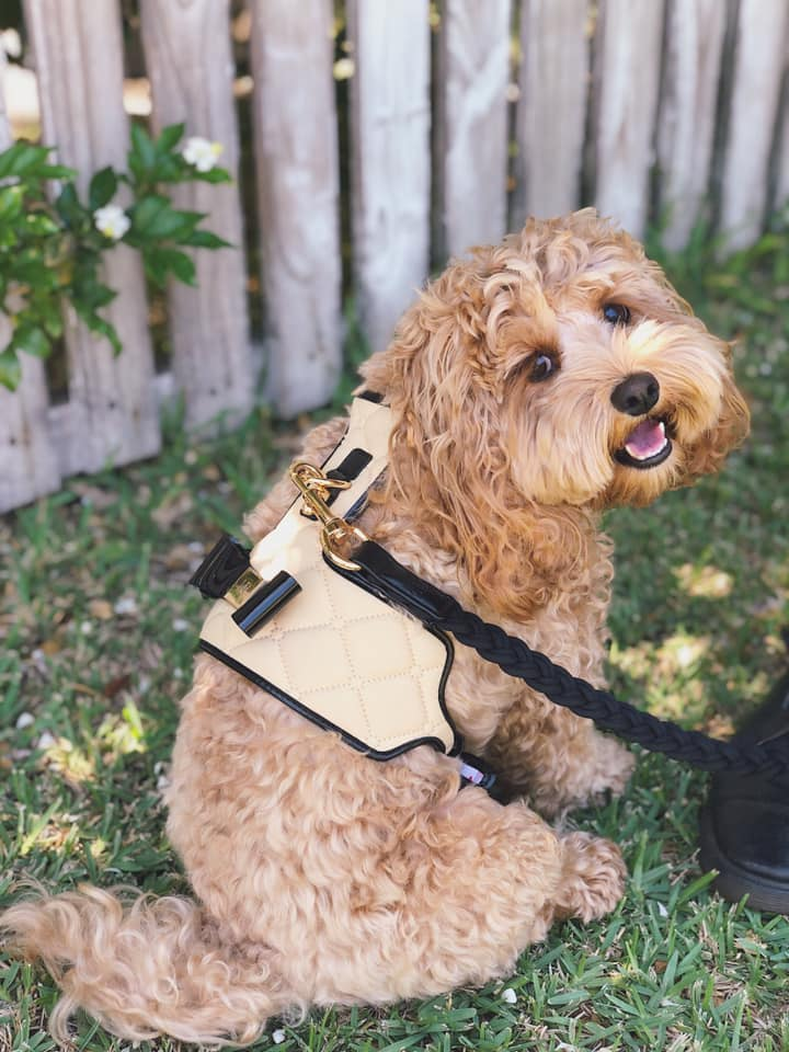 The 'Coco' Dog Harness (Bow)