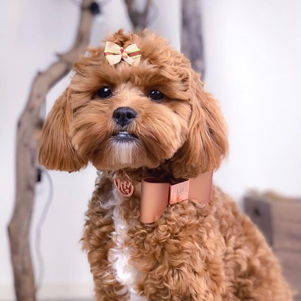 Leather Bow Collar - Cinnamon