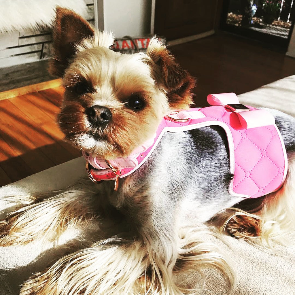 The 'Fuchsia' Dog Harness