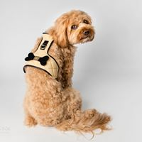 The 'Coco' Dog Harness (Bone)