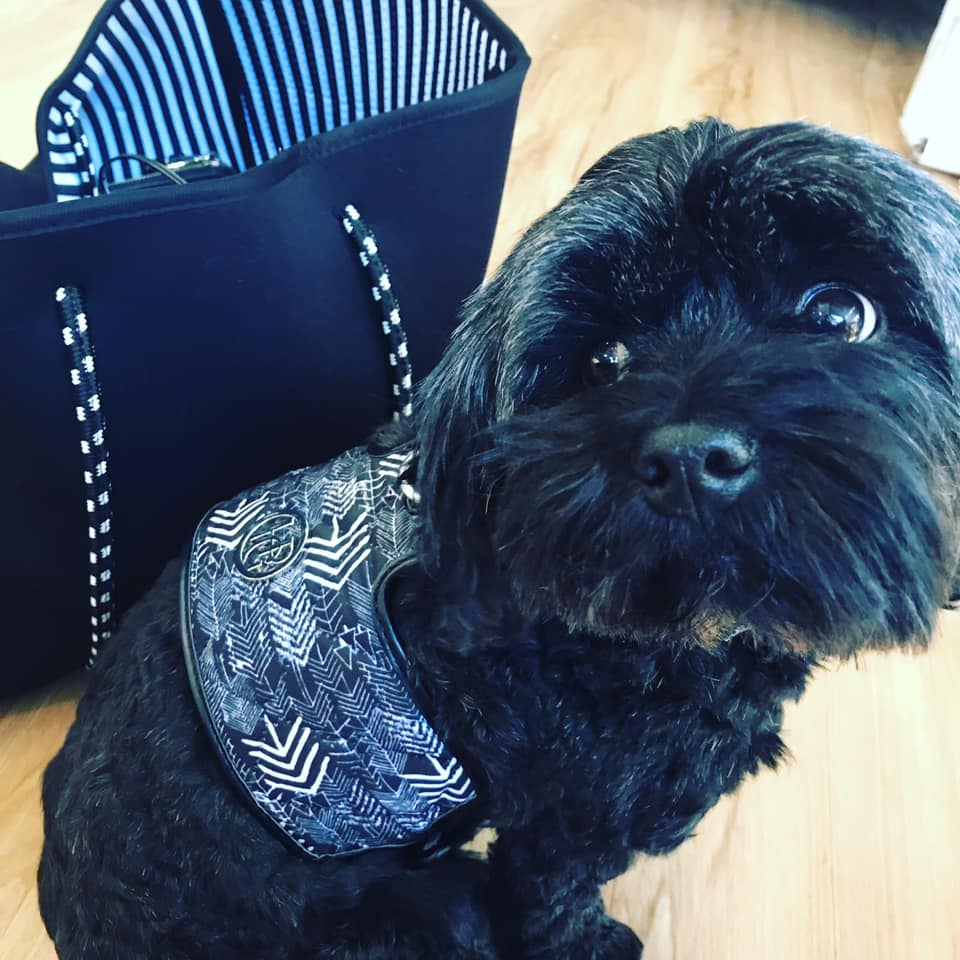 The 'Chevron' Dog Harness