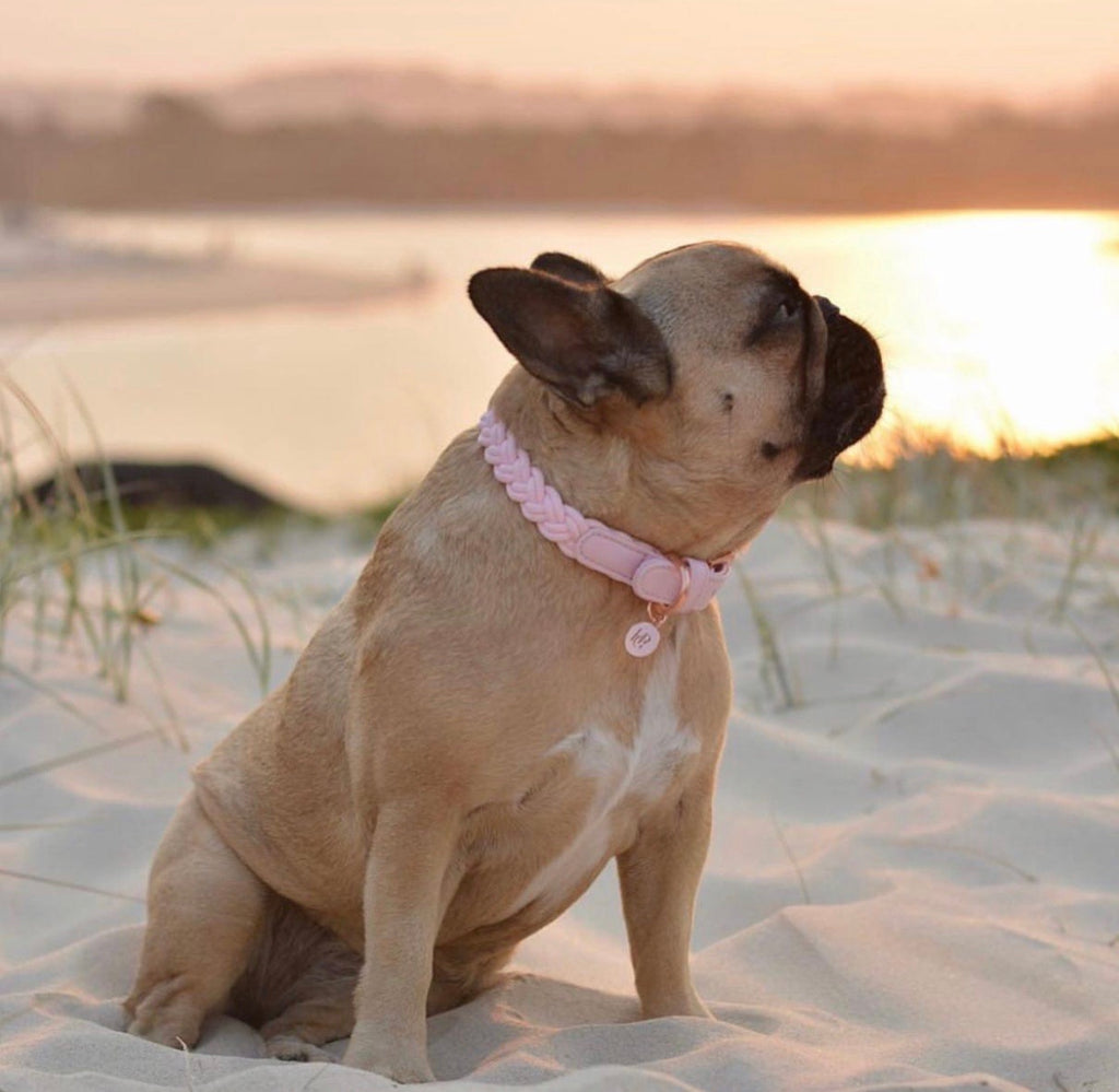 Dog Collar Baby Pink Plaited