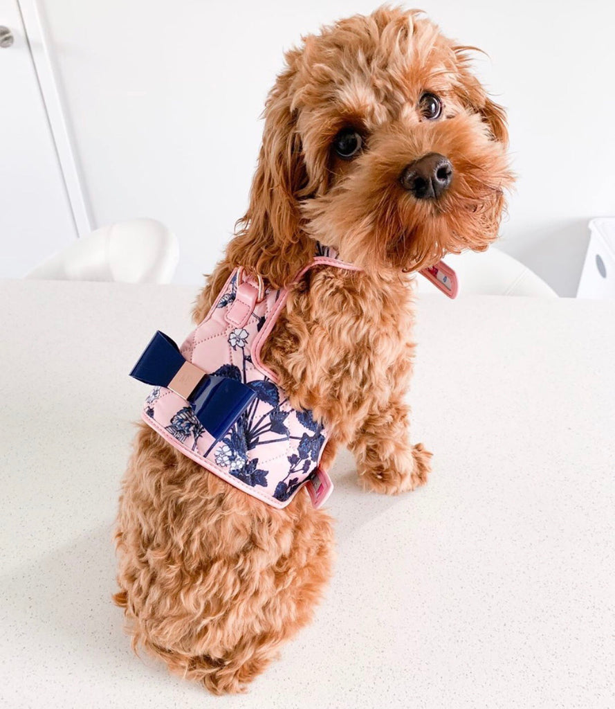 The 'Blossom' Dog Harness