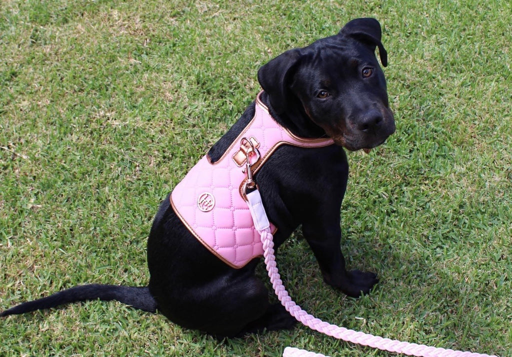 The 'Peony' Dog Harness