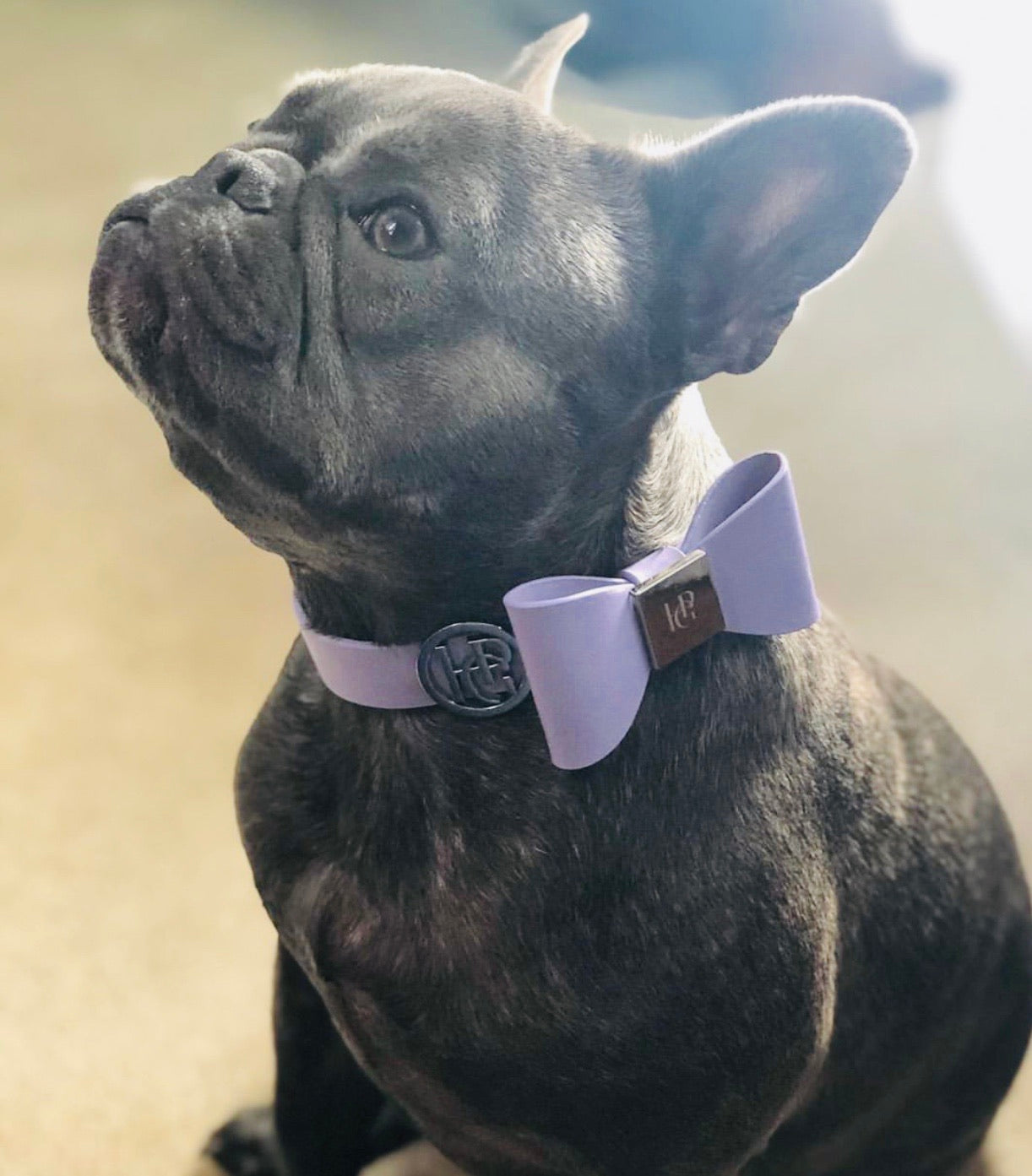 Leather Bow Collar - Lilac Hue