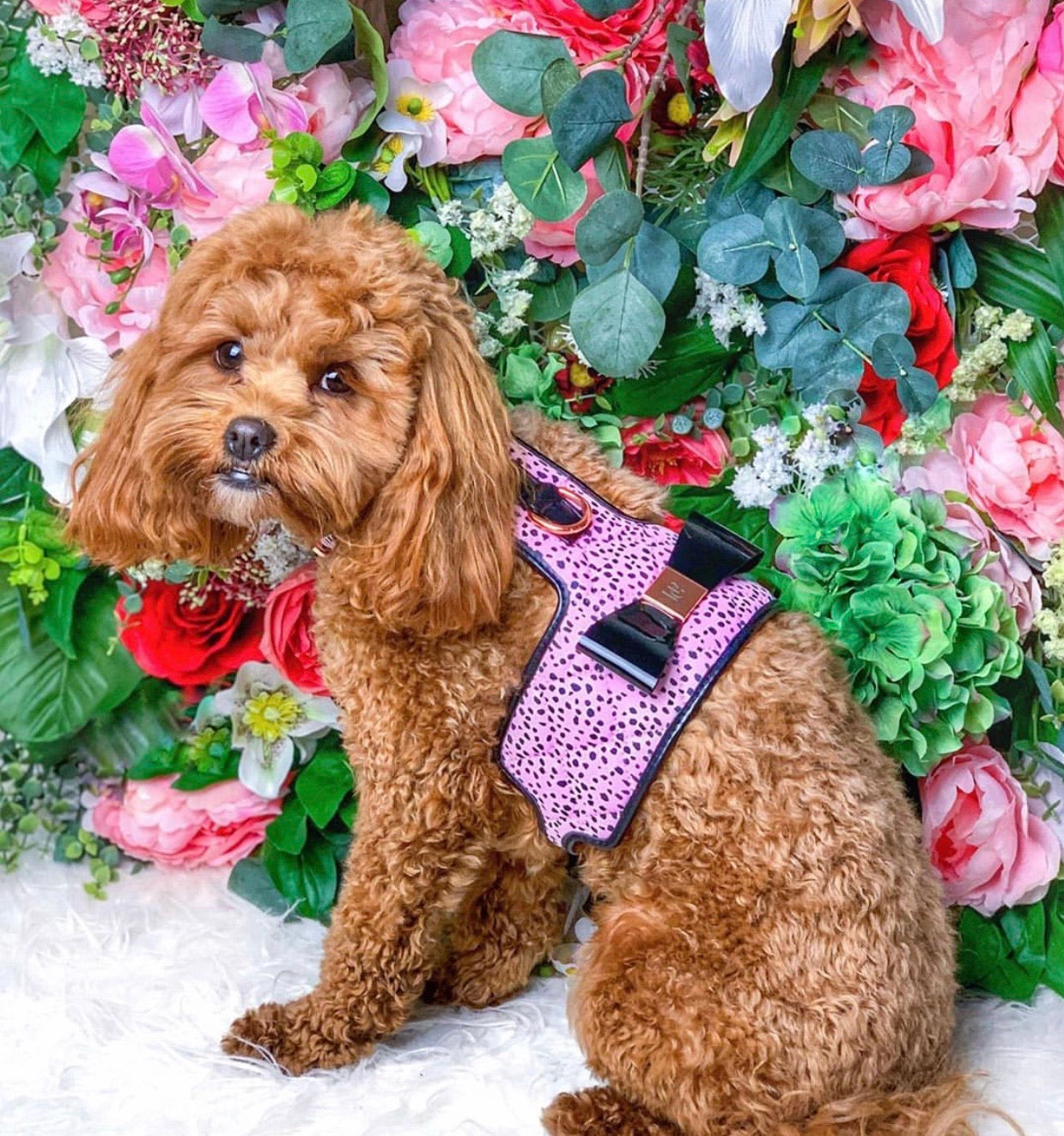 The 'Dahlia' Dog Harness