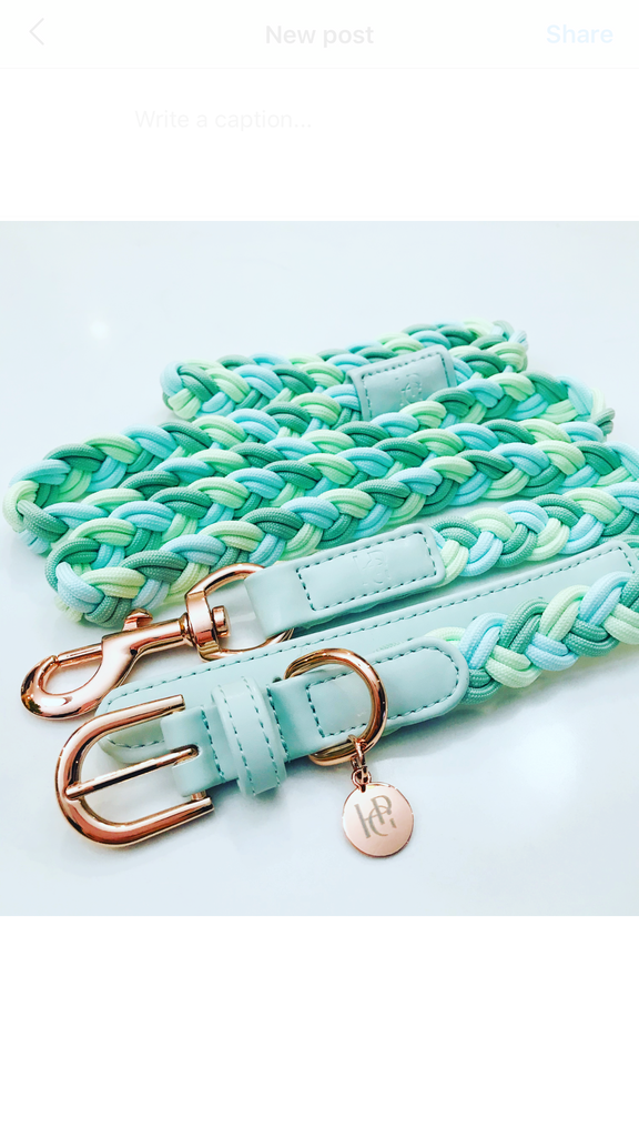 Dog Collar Aquamarine Plaited