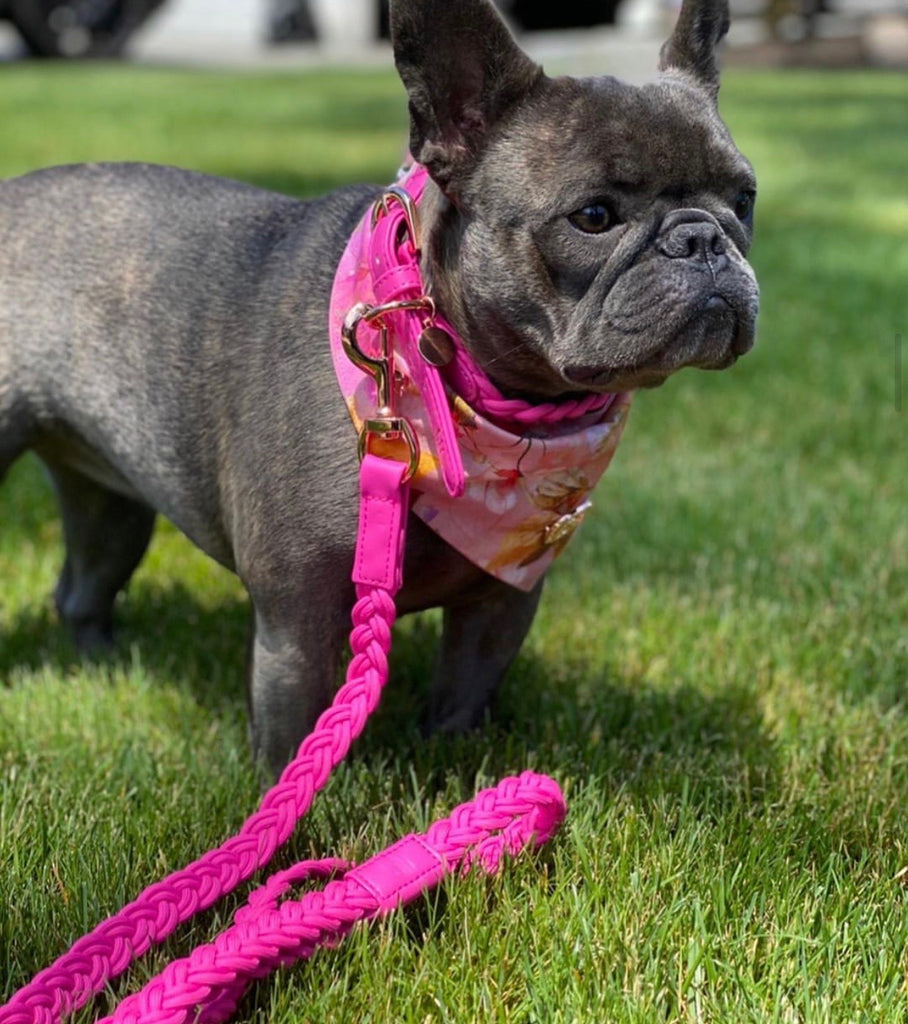 Dog Lead Lipstick Pink Plaited