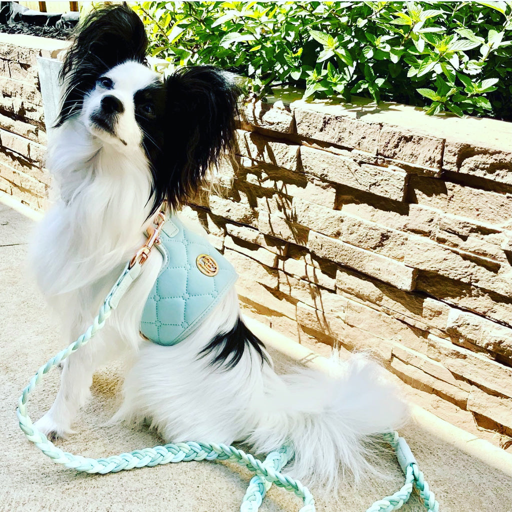 The 'Aquamarine' Dog Harness