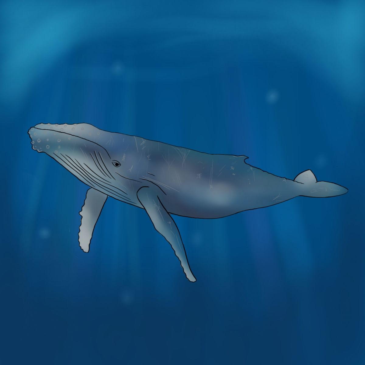 Under The Sea Whale