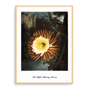 The Night-Blowing Cereus (Affiche)
