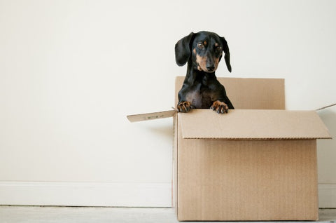 Dog coming out of a box, for AutoBrush blog