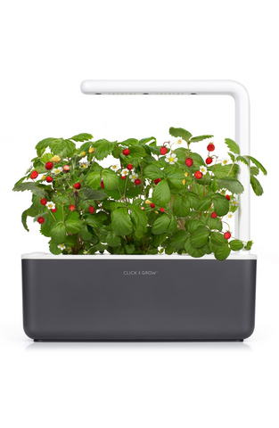 Indoor garden on white background, for AutoBrush