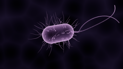 A generic image of a bacteria, for AutoBrush