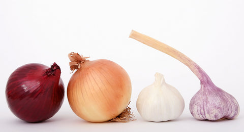 A row of onions and garlic.