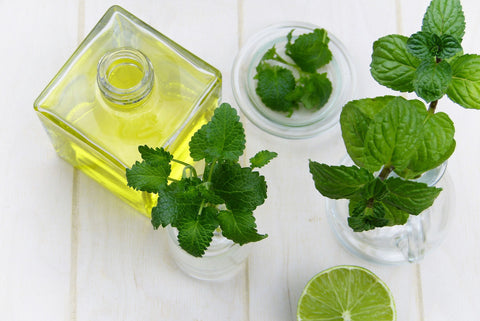Open bottle of peppermint oil with peppermint leaves, for Autobrush