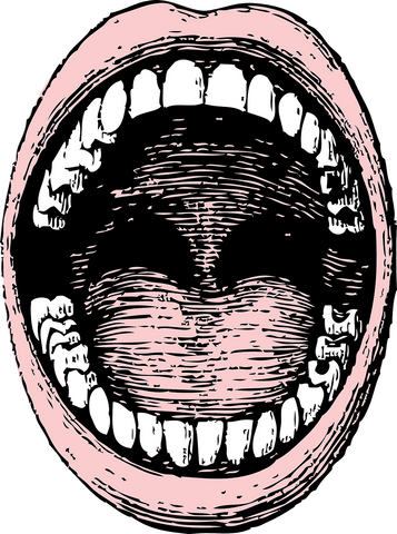 Drawing of an open mouth showing all the teeth, for AutoBrush