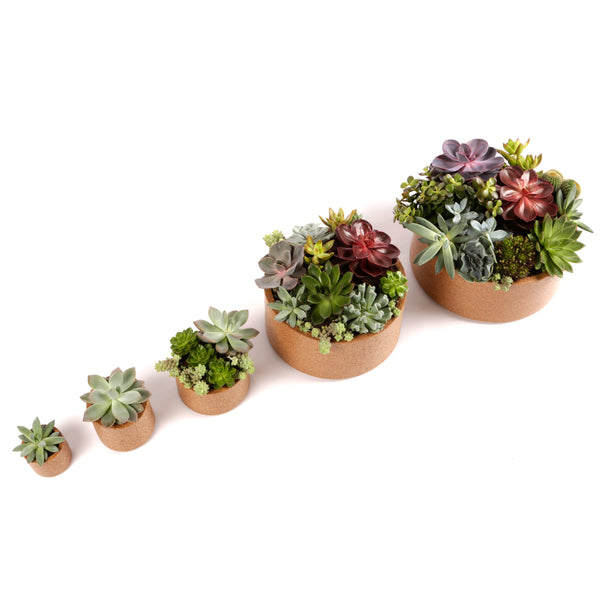 Succulents, Succulent Arrangements, Office Plants, Indoor Plants