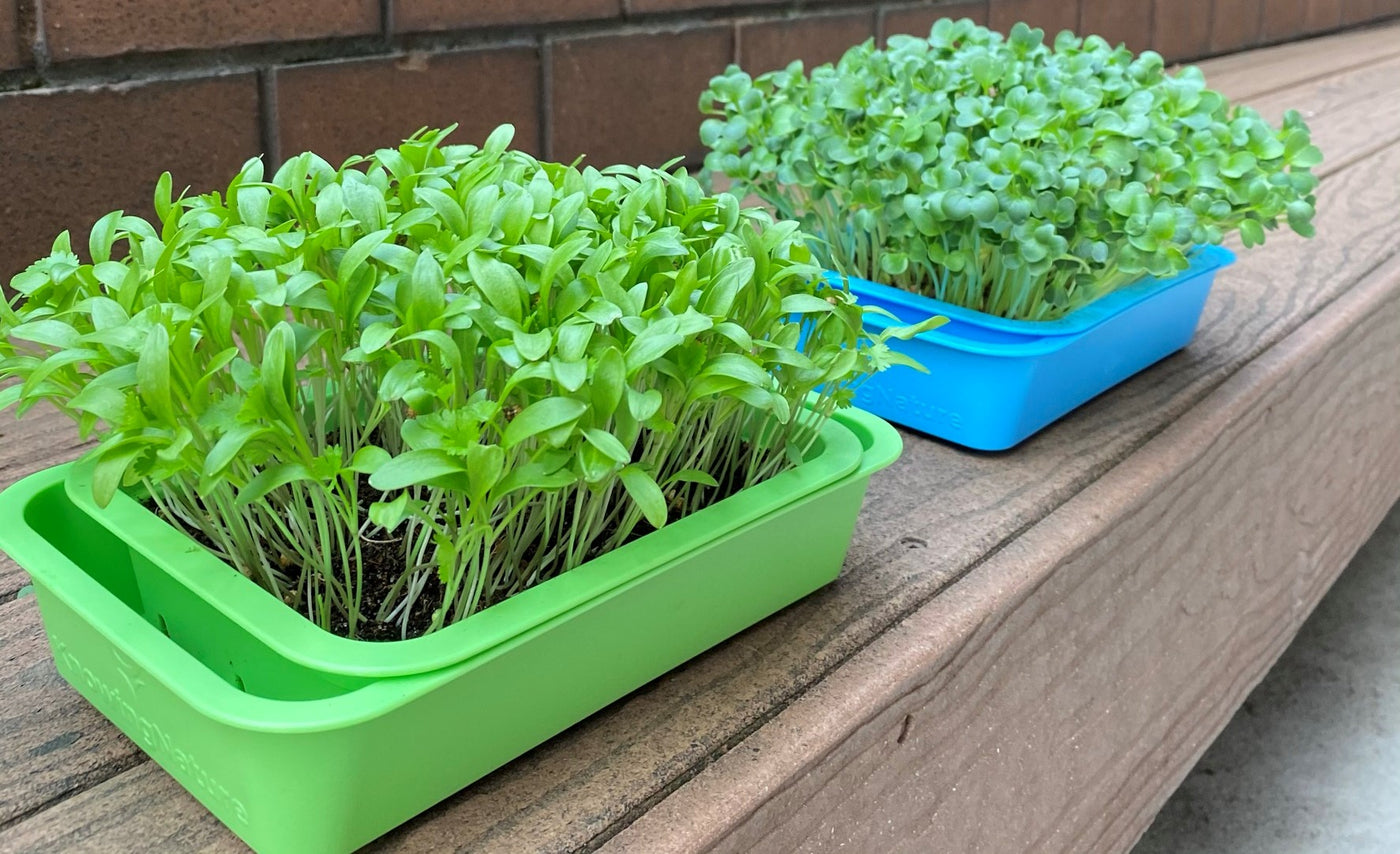 Best way to grow microgreens. Shallow microgreens tray to grow microgreens at home. Grow kit. DIY microgreens tray. Green planter. Blue Planter. BPA free.