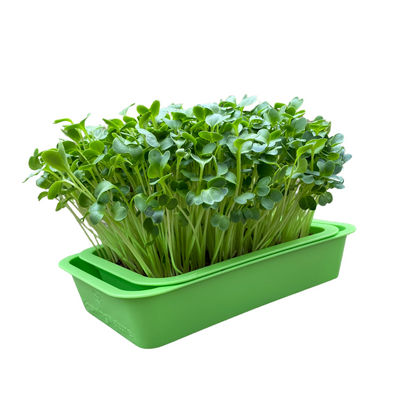The KnowingNature Microgreens Planter + Tray