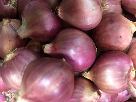 Shallots (small red onion)