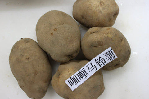 Organic Curry Potato