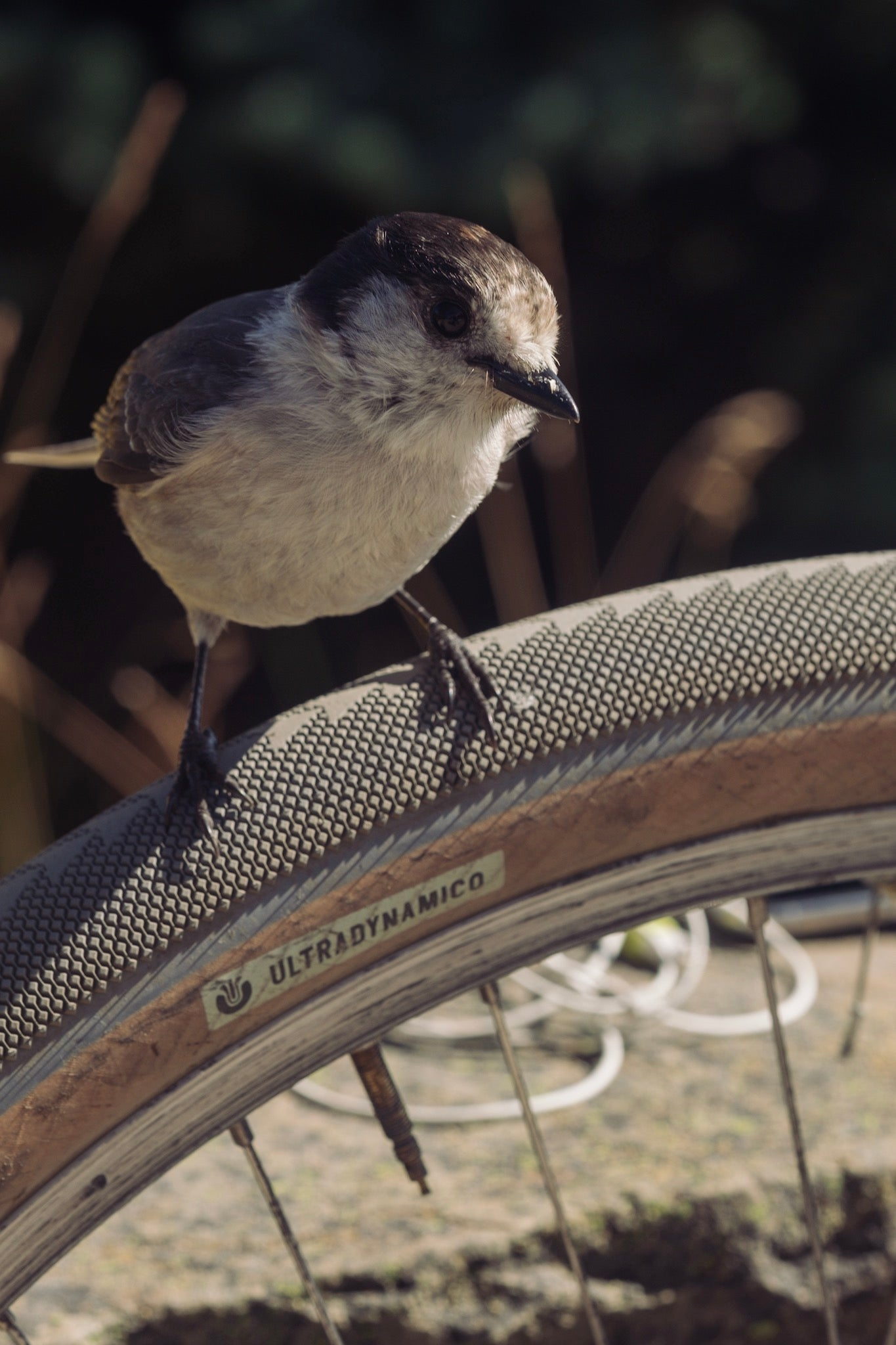 Birding is the new golf.  Bikes is no longer the new golf. - UDCO.