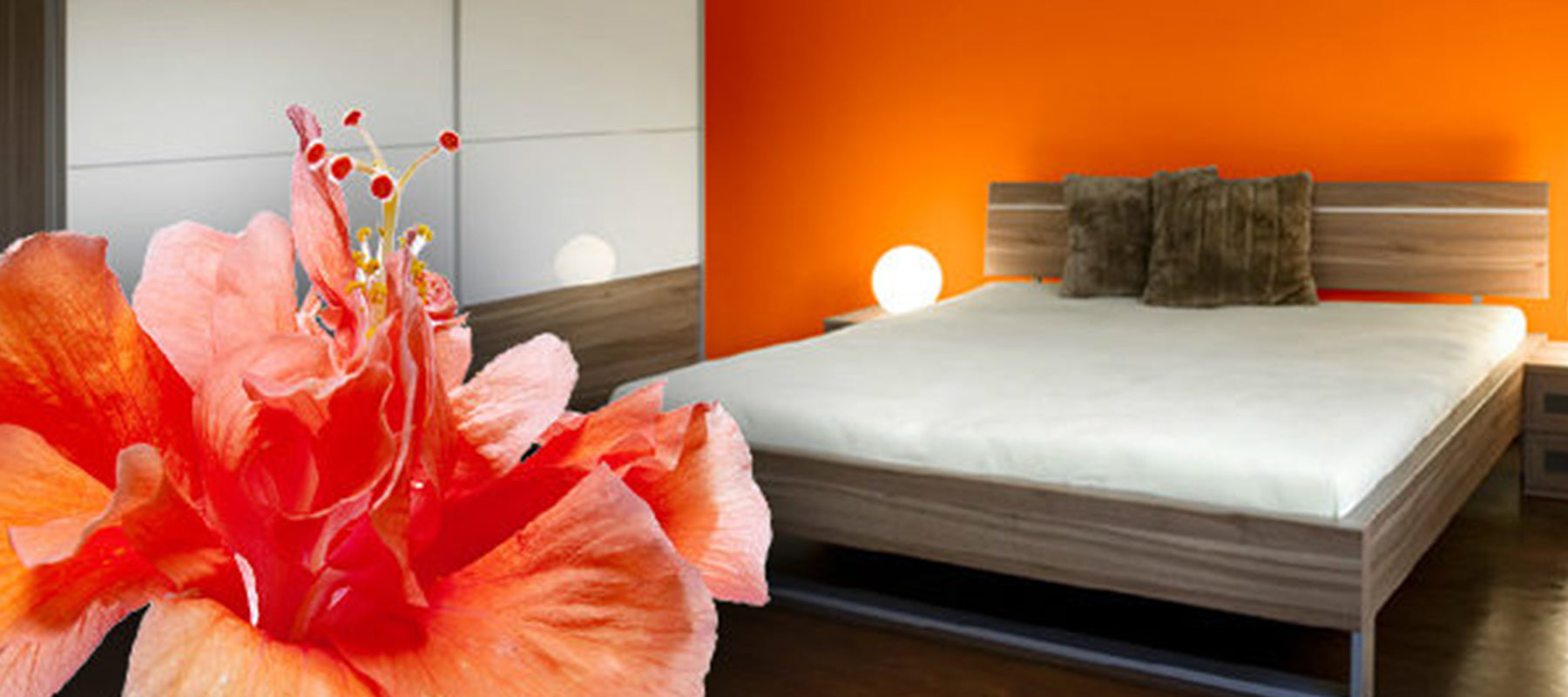A bedroom with neutral furniture and a bright orange wall, with an orange flower as an overlay.