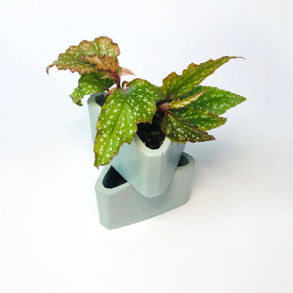 Small Triangle Planter - Mint