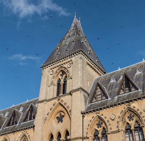 Swifts flying around Oxford University Museum of Natural History
