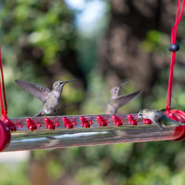 Best Hummingbird Feeder - Buy 2 Get FREE Cleaning Brush and 1 Hook Set