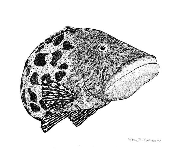 Peter B Morrison 'Kurop (Potato Cod)' Ink pen on archival paper