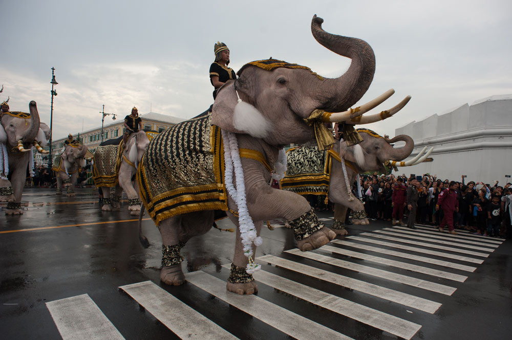 Elephants Pay Respects At Grand Palace