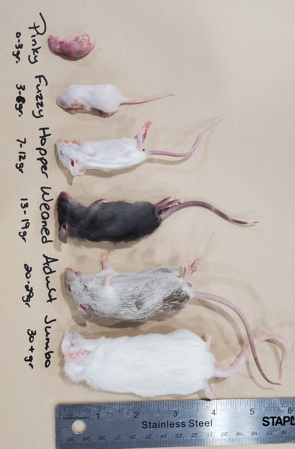 Mice Frozen Various Sizes